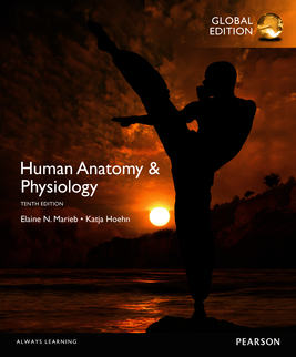 Human anatomy and physiology 10th edition marieb